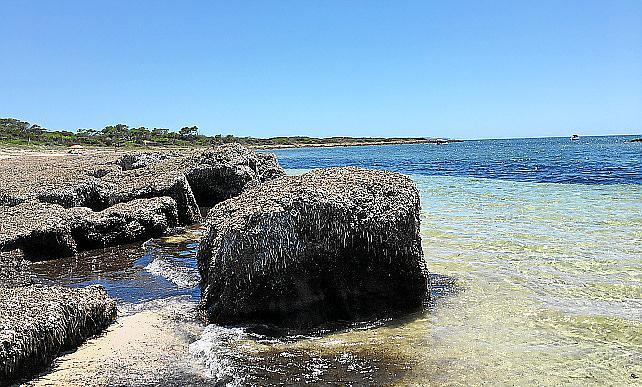 Gigantische Seegrasanhäufungen auf dem Weg nach Es Carbó.