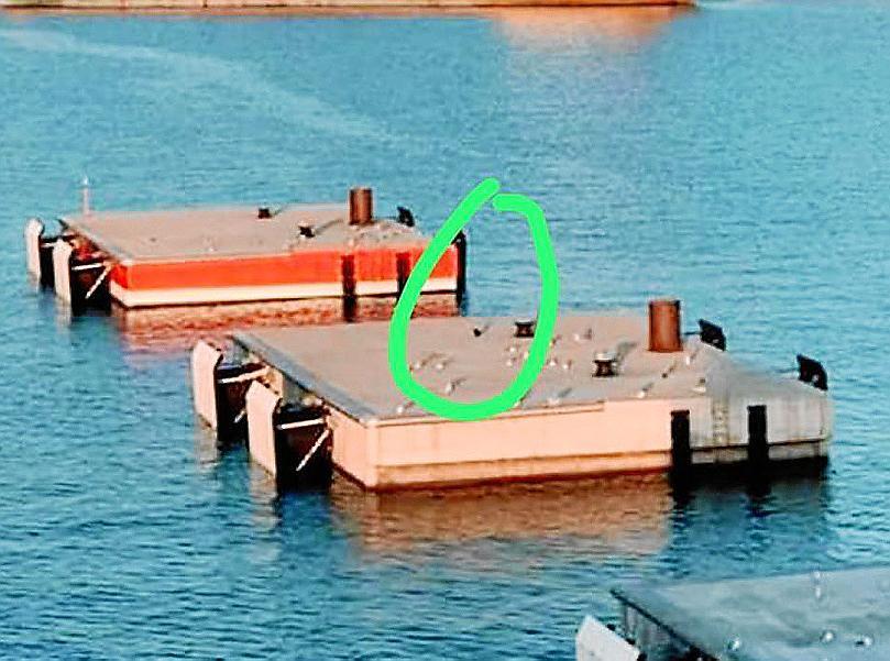 PALMA - Laborioso rescate de una gata atrapada en el puerto de Palma.