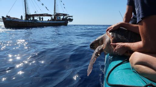 Die beiden Meeresschildkröten wurden diese Woche bei Calvià ins Meer freigelassen.