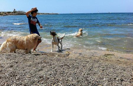Die Strände, an die Hunde dürfen, ist auf Mallorca stark begrenzt.