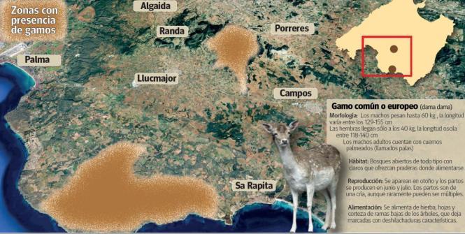 In diesen Gegnden leben Hirsche auf Mallorca.