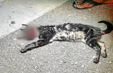 Die Katze wurde Opfer von Tierquälern.