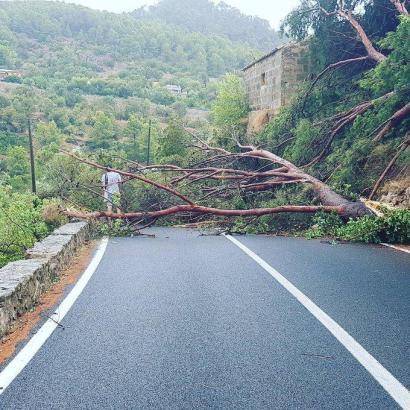 Mehrere Bäume waren umgestürzt, Straßen wurden unpassierbar.