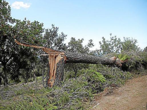 Umgestürzte Bäume blockierten Zufahrten.