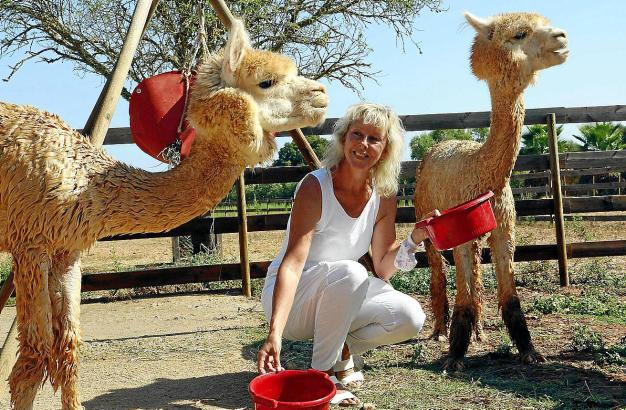 Iris Haider hat die neugierigen Tiere ins Herz geschlossen. Auf ihrer Finca haben die Alpakas viel Bewegungsfreiheit.