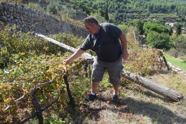 Pau Bujosa, Präsident der Genossenschaft Malvasia in Banyalbufar, zeigt die Schäden, die auf dem Landgut Son Nyoc entstanden sind.