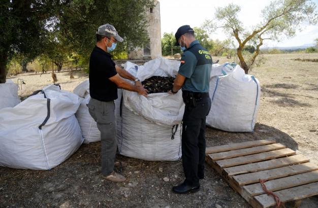 Ein Beamter der Guardia Civil überprft die Algarroba-Ladung eines Landwirts.