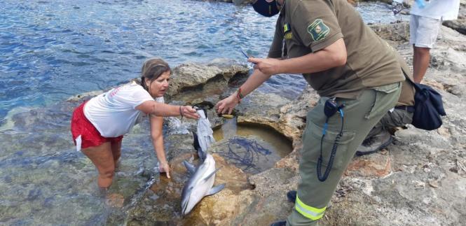 Den Meeressäuger konnten die Helfer nicht mehr retten.
