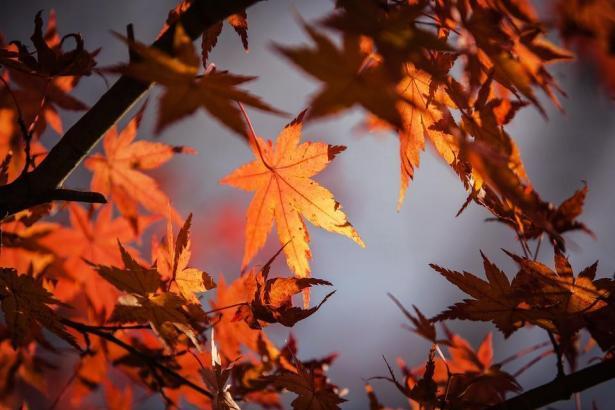 Die Blätter der Bäume werden sich schon bald verfärben.