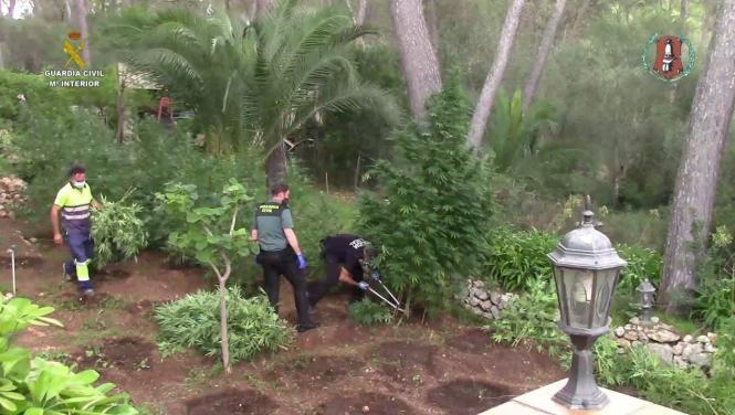 Beamte der Guardia Civil inmitten der Plantage.