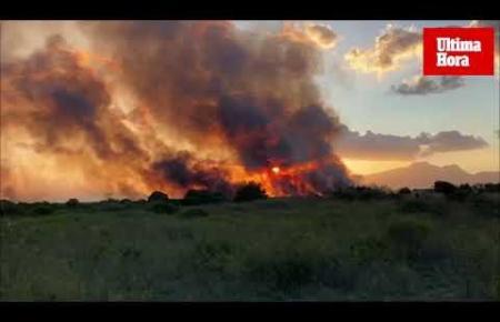 Großbrand im Feuchtgebiet der Albufera in Mallorcas Nord-Osten