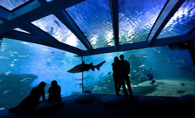 Blick in das Palma-Aquarium.