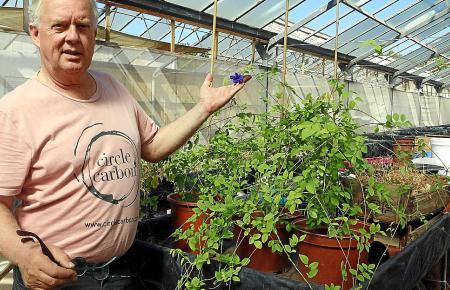 Auch Heilpflanzen baut Christer Söderberg an.