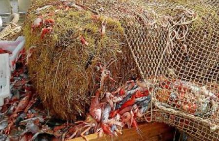 Große Strohballen in den Fangnetzen der mallorquinischen Fischer sorgen für Ärger.