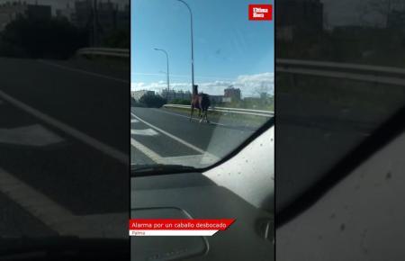 Das Pferd war ausgebüxt und trabte über die Ringautobahn.