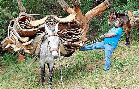 Der Andalusier Miguel Roman lädt die Korkrinde zum Abtransport auf einen Esel.