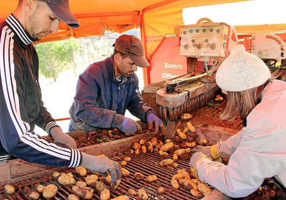 Mitarbeiter der Kartoffelbranche im Einsatz.