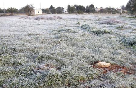 Frost auf einer Rasenfläche.
