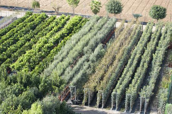Gartencenter und Baumschulen auf Mallorca dürfen öffnen, auch wenn sie mehr als 700 Meter Verkaufsfläche aufweisen.