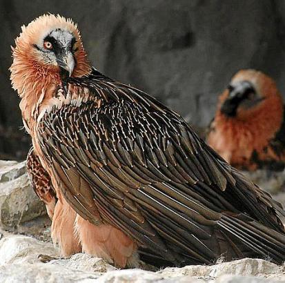 Das Gebirge zwischen Spanien und Frankreich ist Heimat verschiedener Vogelarten.
