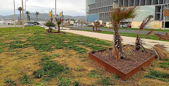 Um die Grünalage des Kongresspalastes in Palma scheint sich länger niemand gekümmert zu haben.