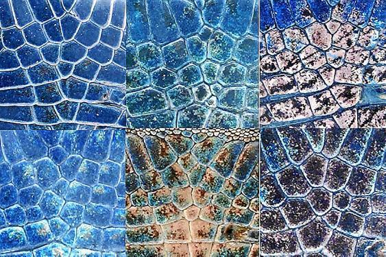 Die Anordnung der Schuppen ist bei jeder Eidechse verschieden, wie diese sechs Aufnahmen der selben Brustpartie von sechs Tieren zeigen.