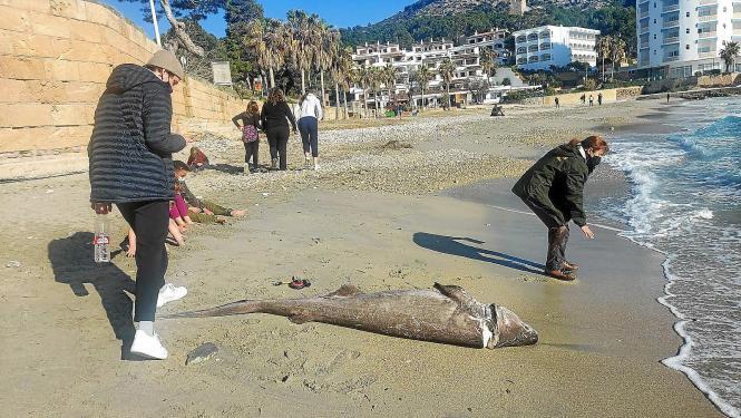 Der Hai soll seit etwa zwei Tagen tot gewesen sein.