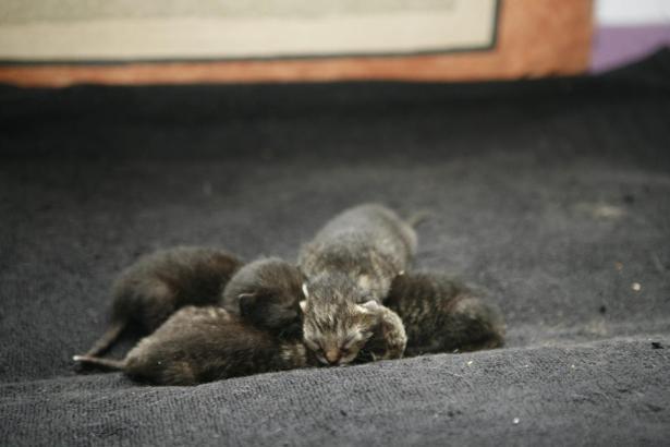 Neugeborene Katzen auf Mallorca.