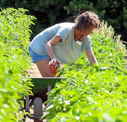 Gemüse machen 32 Prozent der lokalen Erzeugnisse auf der Insel aus.