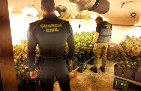 Guardia Civil entdeckt Drogenplantage in El Arenal (Foto: Guardia Civil)
