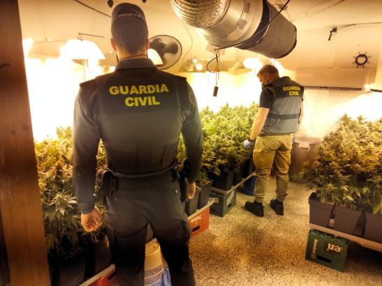 Guardia Civil entdeckt Drogenplantage in El Arenal (Foto: Guardia Civil)