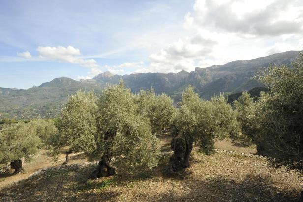 Mallorcas Serra de Tramuntana zählt zum Weltkulturerbe der Unesco.