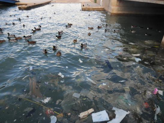 Plastikmüll im Hafenbecken von Port d'Andratx.