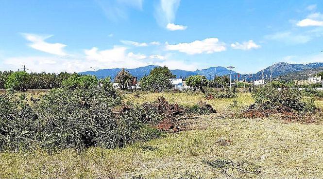 Die agrarischen Parzellen des Showrestaurants Son Amar befinden sich bei Palmayola an der Landstraße Palma-Sóller.