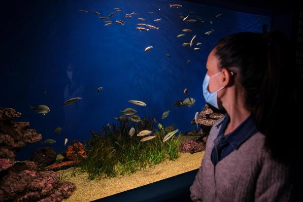 Natürlich herrscht auch beim Besuch im Aquarium Maskenpflicht.