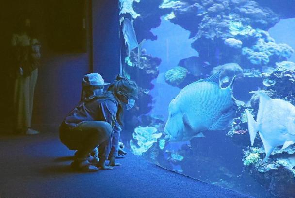 Neue Attraktion: Eine Ausstellung die das Zusammenleben der Tiere im Mittelmeer erklärt.