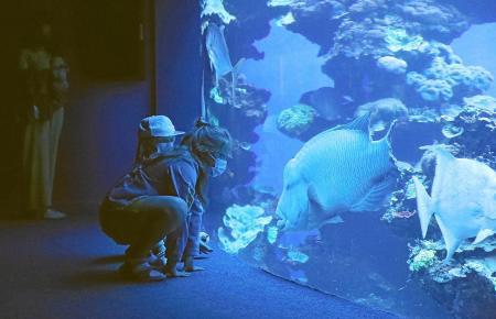 Im Palma Aquarium gibt es viel interessantes Getier zu bestaunen.