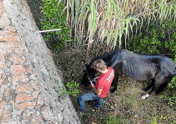 Ein Feuerwehrmann kümmert sich um das verunglückte Tier.