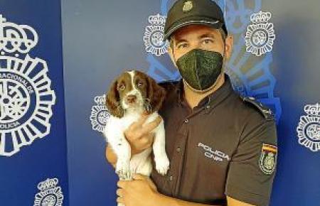 """PALMA. POLICIA NACIONAL. AGENTE ESPECIAL """" SISU """" El nuevo miembro de la Unidad Canina"""