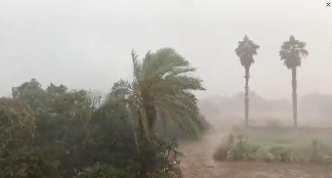 Bei Felanitx peitschten am Samstag Regen und Wind die Palmen.