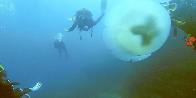 Die Fotos und Videos, die Eulalia Busquets im Netz hochlädt, ziehen viele Taucher nach Port Adriano.