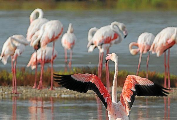 Das Feuchtgebiet ist ein kleines ökologisches Juwel, das mittlerweile auch bei Flamingos beliebt ist.