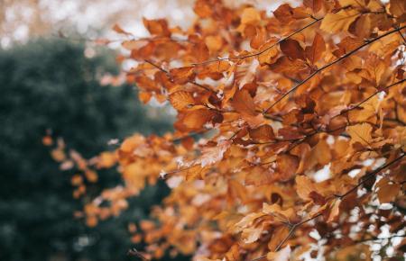 Der Herbst wird auf Mallorca immer vernehmbarer.