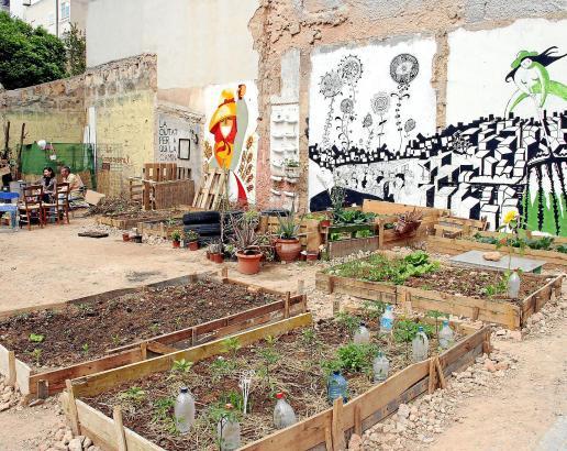 """""""Huerto popular"""" in der Carrer Bisbe Maura: Der Anbau von Salat, Kohl- und anderen Gemüsesorten soll eine alternative Nahrungsqu"""