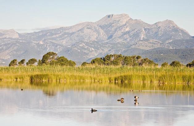 Der Naturpark S'Albufera in Muro. Der Zugang zum Besucherzentrum wird kostenpflichtig.