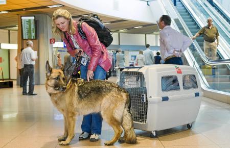 Über 50.000 Hunde hat allein Air Berlin in den letzten 18 Monaten zwischen Deutschland und Mallorca befördert. Die meisten davon