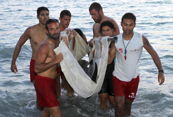 Strandwächter trugen den Delfin auf einer Tuchbahre aus dem Wasser.
