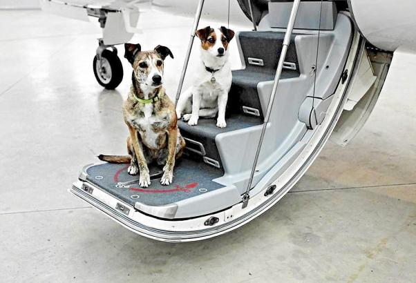 Hunde bis zehn Kilo dürfen die Mitglieder der Jetsharing-Community Flyvictor kostenlos mitnehmen.
