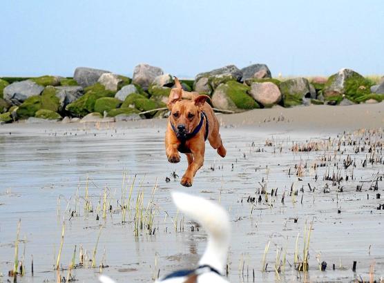Mia, hier an einem norddeutschen Strand, stammt aus einem Tierheim auf Mallorca.
