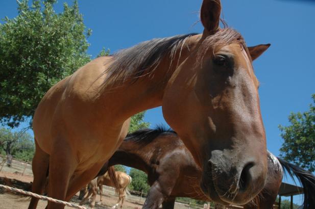 Pferdefleischskandal? Was können wir denn dafür?